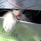 Find me! by Ana Belaj