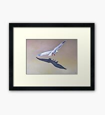 Seagull in Flight 2 Framed Print