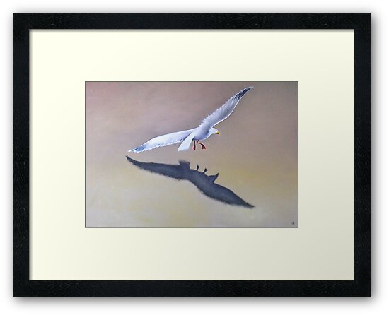 Seagull in Flight 2 by Karsten Stier