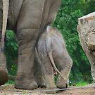 ... Want een Olifant gaat door ... (Colonel Hathi Elephant March) by Hans Bax