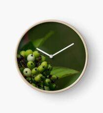 Red Osier Dogwood Berries Clock