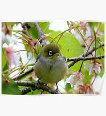 The Branch Manager! - Silvereye - NZ Poster