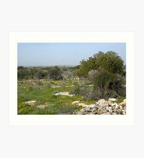 Near The Negev Art Print