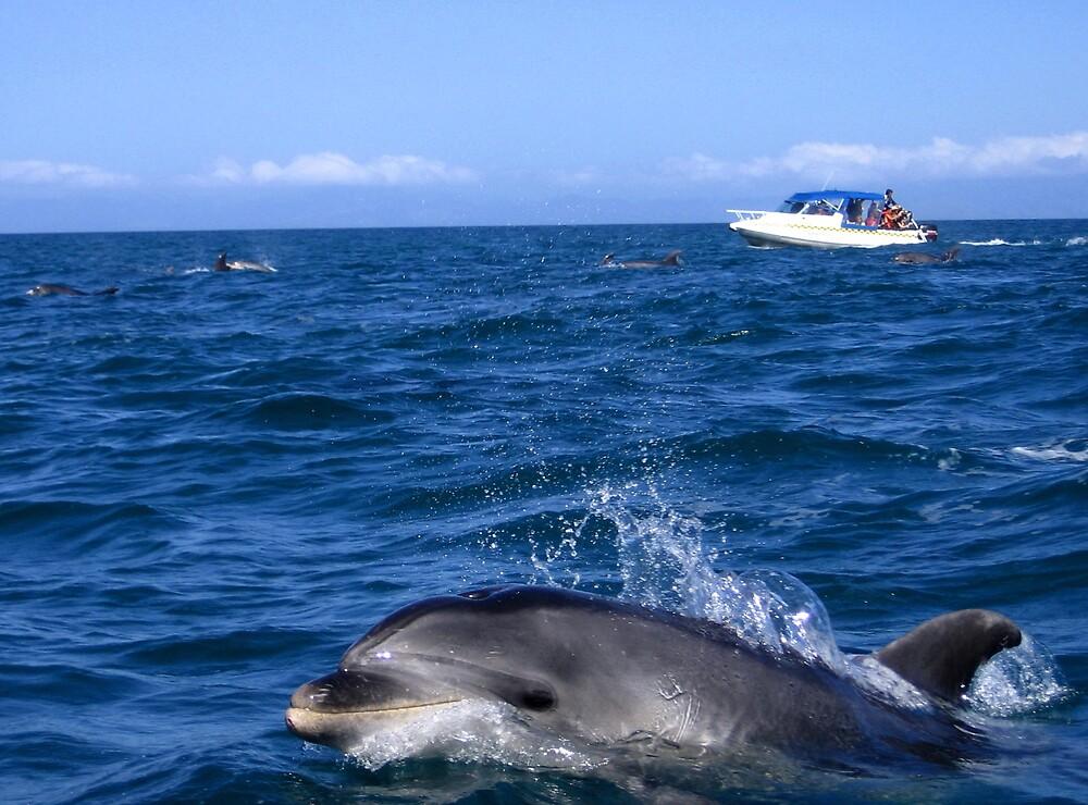 Dolphin by SinaStraub