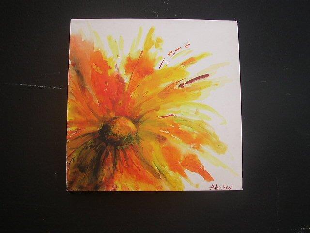 daisy 2 by readlocations
