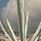 Welcome to Genova!!!! by Paola  Massa