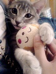 lovely cat by amysay91