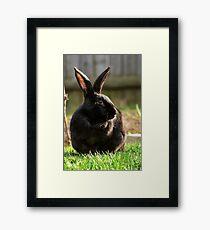 Black rabbit Framed Print