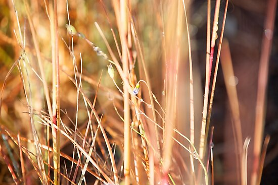 Nature in abstract - dry grass with delicate small blue flower by brians101