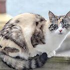 Nigella watchful...........Dorset UK by lynn carter