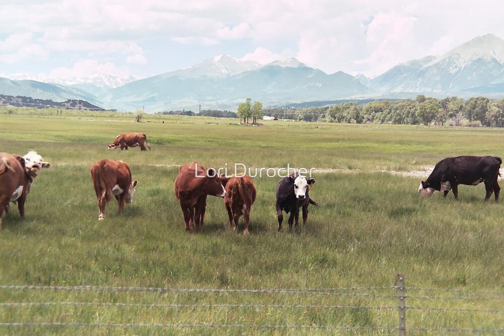 Cows by Lori Durocher