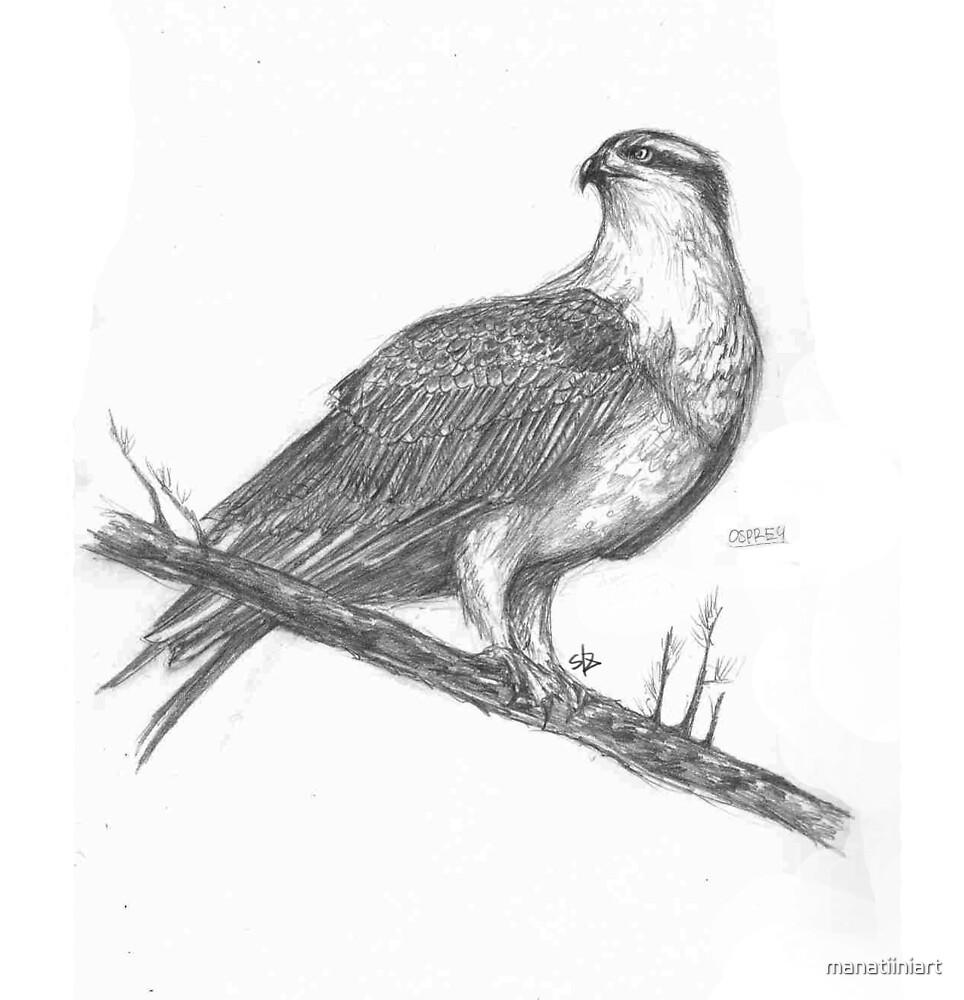 Osprey by manatiiniart