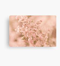 Valarian Blossoms Macro Canvas Print