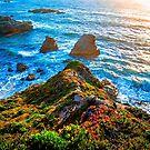 big sur california by ALEX GRICHENKO