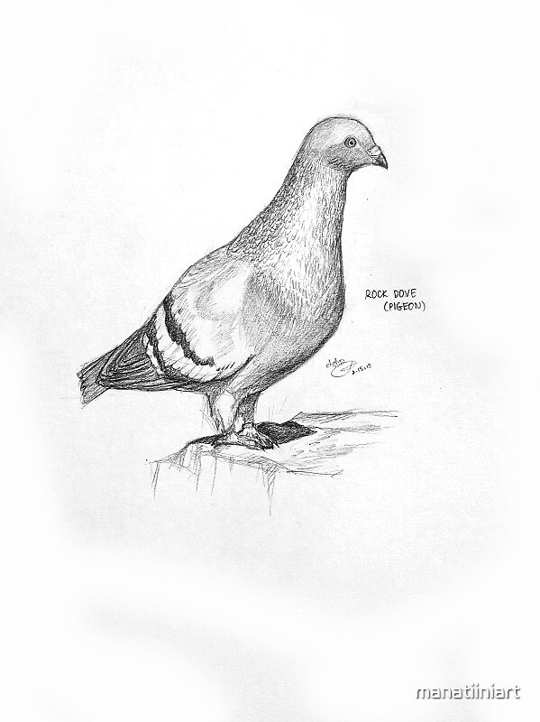 Pigeon by manatiiniart