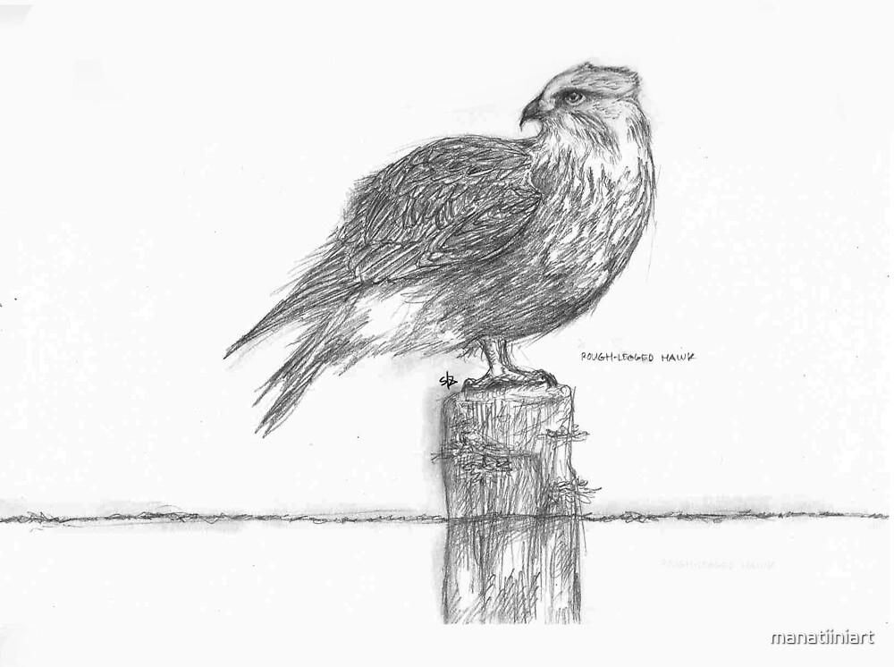 Rough-Legged Hawk by manatiiniart