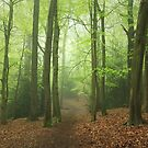 The Green Path by Ursula Rodgers Photography