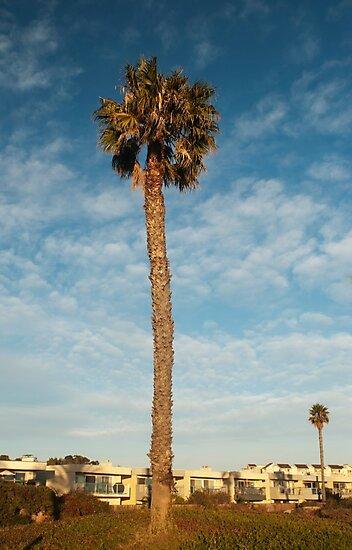 Lonely palm tree beach photography by SammyPhoto