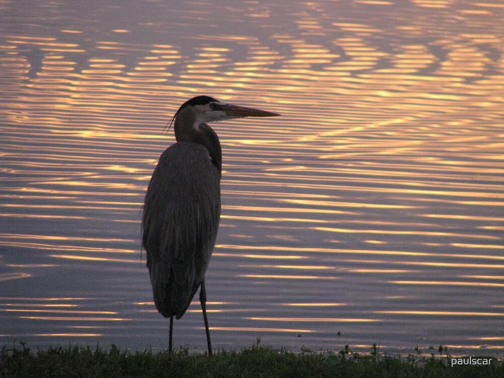 heron sunrise by paulscar