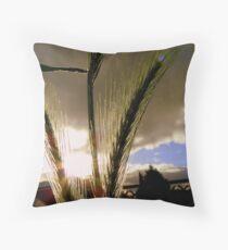 Sun Kissed Grasses - Grass Seeds - NZ Throw Pillow
