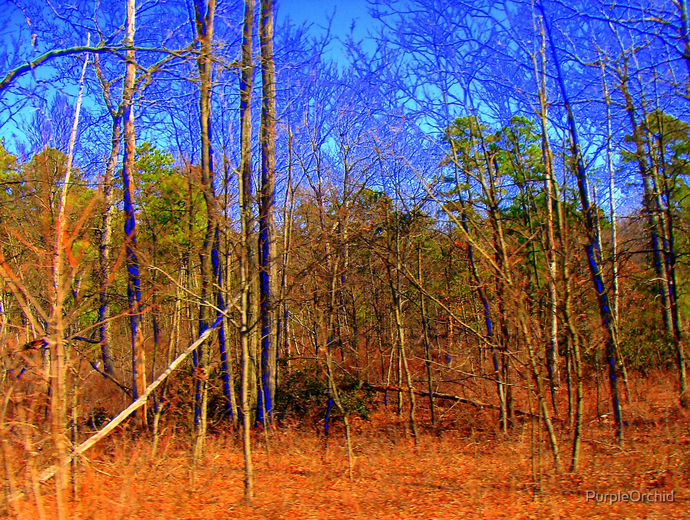 the Saturated Woods by PurpleOrchid