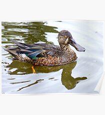 Bill Shoveler - Shoveler Duck - NZ Poster