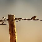 Bird on a Wire by Sherryll  Johnson