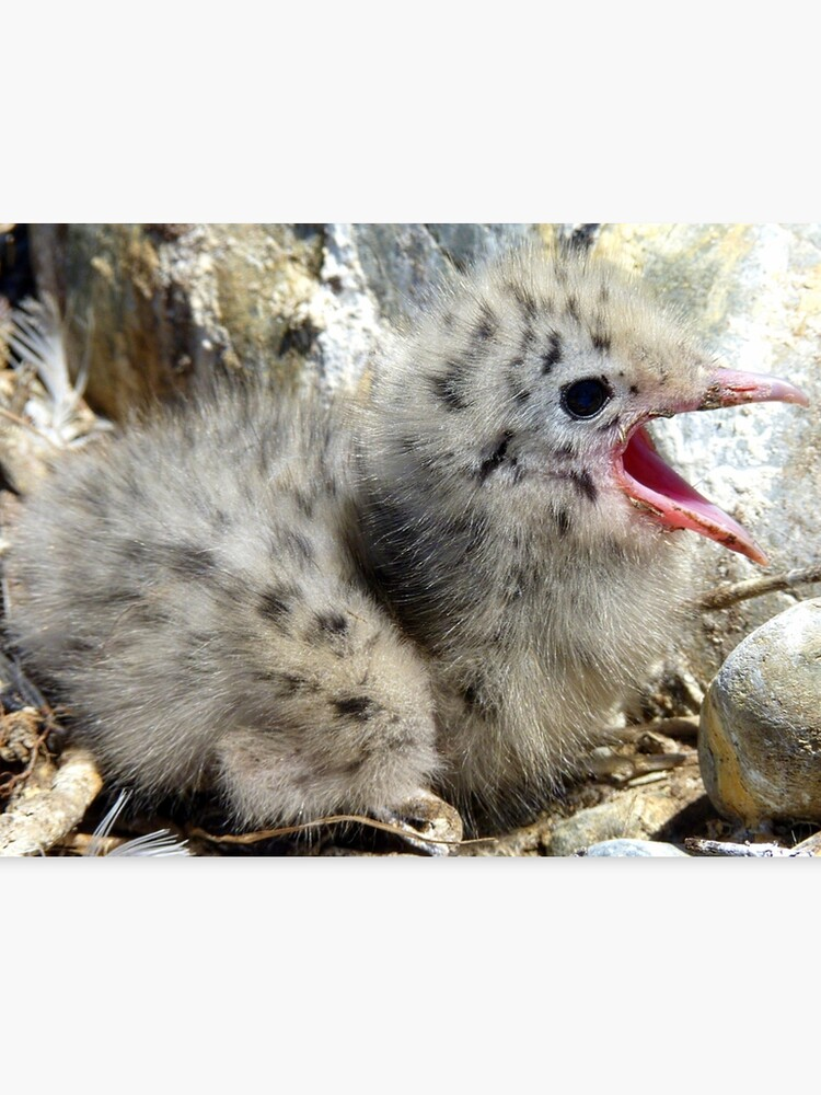 Where Did Everyone Go! - Baby Seagull - NZ | Canvas Print