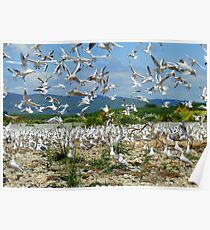 Flying Chaos! - Seagull Colony - NZ Poster