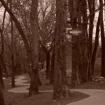 trail by dannielle
