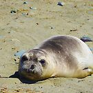 Just Another Relaxing Day at the Beach by Sandy O'Toole
