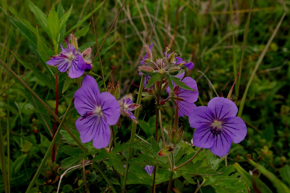 Tundra Flowers by Chris Popa