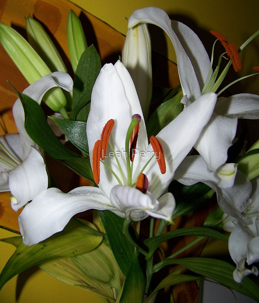 White Lilly by Leah Perry