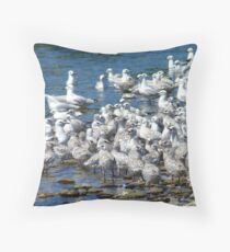Crowded Pools! - Seagulls - NZ Throw Pillow