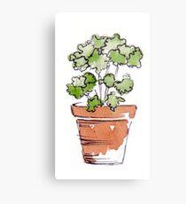 Herbs in pots - Parsley  Metal Print