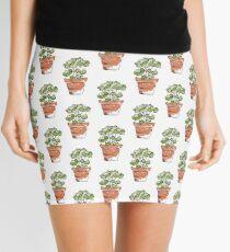 Herbs in pots - Parsley  Mini Skirt