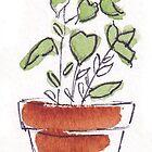 Herbs in pots - Oregano by Maree Clarkson