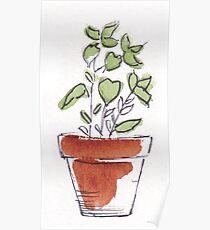 Herbs in pots - Oregano Poster