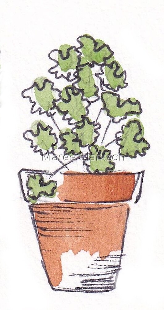 Herbs in pots - Coriander by Maree Clarkson