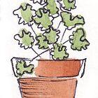 Herbs in pots - Coriander by Maree Clarkson