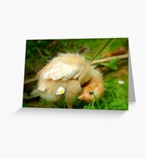 Whoops-a- Daisy! - Baby Chick - NZ Greeting Card