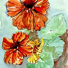 Nasturtiums, sunny Vit. C by Maree Clarkson