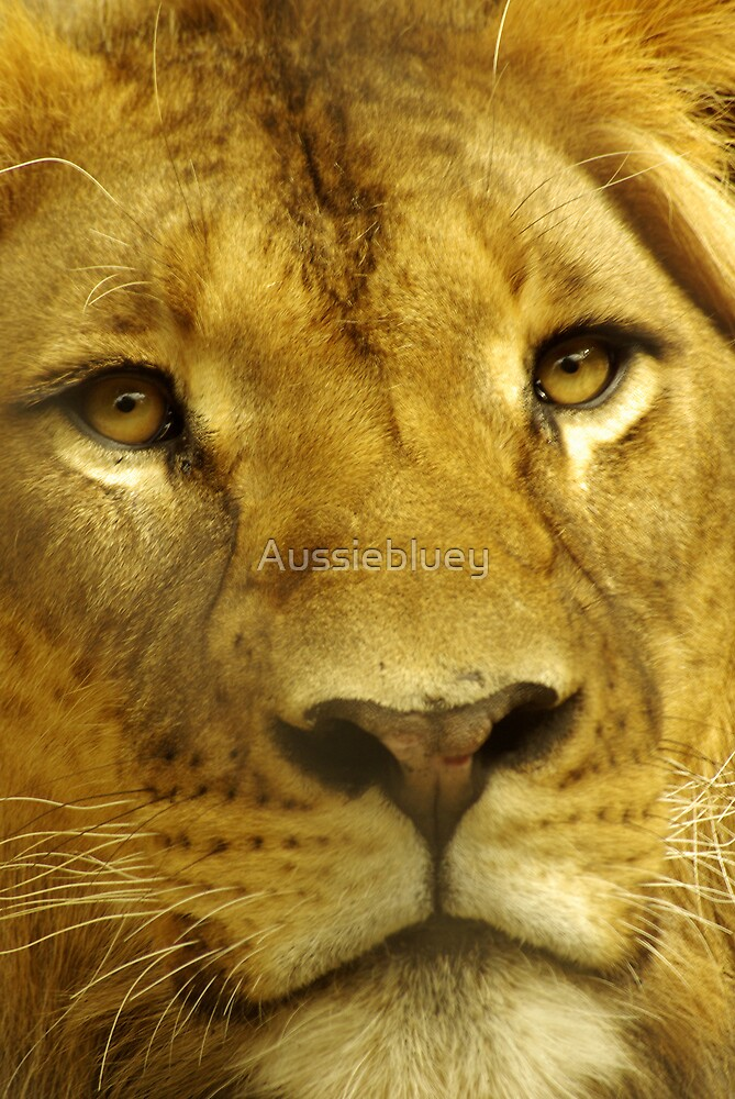 Eye Contact. by Aussiebluey