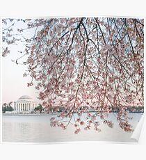Washington D.C. Blossoms Poster