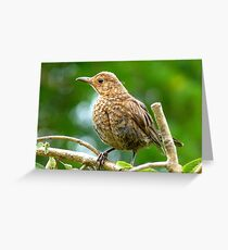 Look I Still Have My Egg Tooth! - Baby Black Bird - NZ Greeting Card