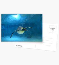 Penguin Blues Postcards