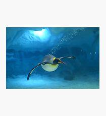 Penguin Blues Photographic Print