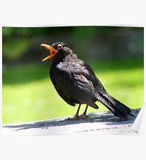 Hey, This Is My Spot! - Blackbird - NZ Poster
