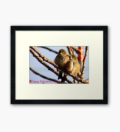 Happy Valentine's Day - Silvereye - NZ Framed Print