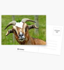 Nanny Reporting For Duty! - Goat - NZ Postcards